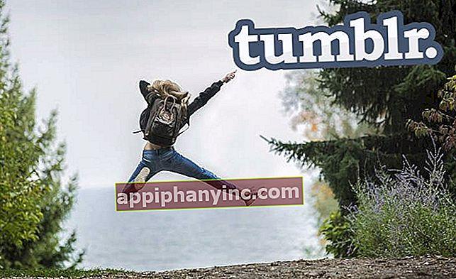 Tumblr-varmuuskopion lataaminen (ZIP-muodossa tai WordPressissä)